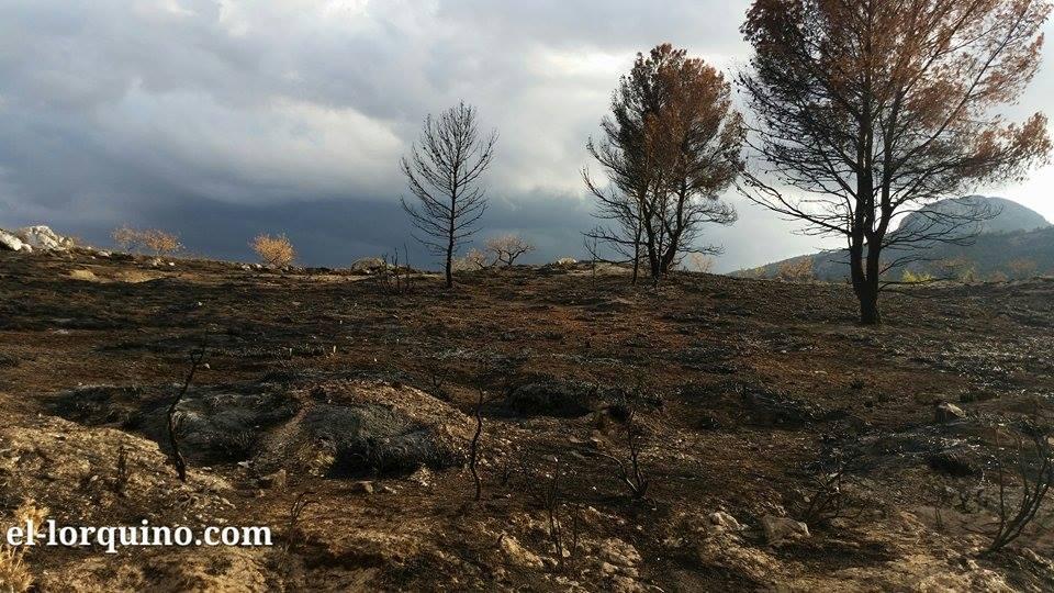 En imagen: Sierra del Almirez casi dos meses después del incendio que sufrió este pasado verano.