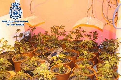 cannabis murcia